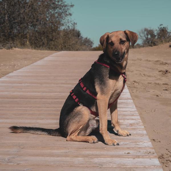 Hundegeschirr 'Safety+'
